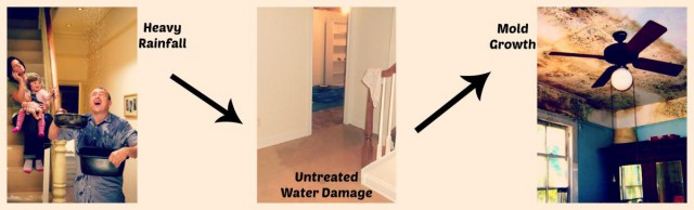 Growth of Mold at Home