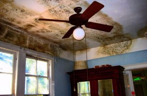 Household Mold Problem
