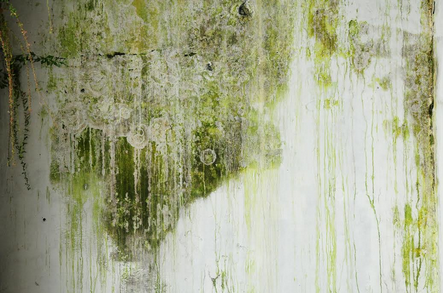 What To Do With Mold and Smoke Damage
