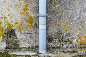 philadelphia mold damage remediation