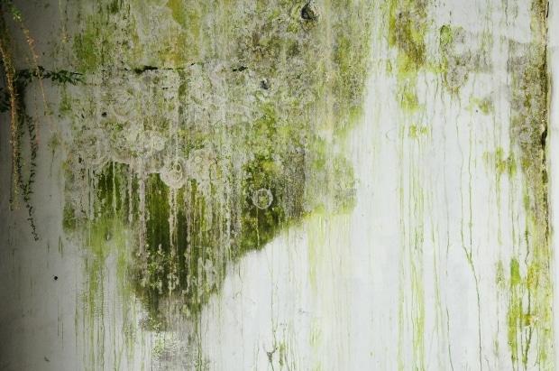 Philadelphia mold damage remediaton